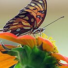 Butterfly and the Sunflower by DottieDees