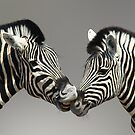 ZEBRA PAIR - NAMIBIA by Michael Sheridan