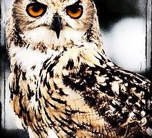 Eagle Owl by Jay Payne