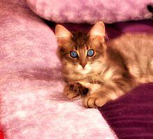 Princess blue eyes by terrebo