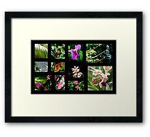 A~natural Botanics Collage  Framed Print