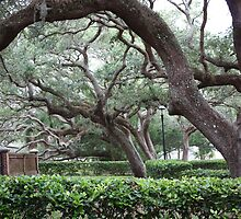 Majestic Live Oaks by DuvLady