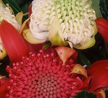 Red and White Waratahs by Clare McClelland