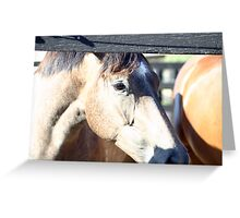 Yearling Thoroughbred Fillies  Greeting Card