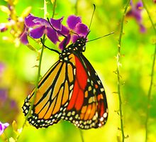 Colorful Butterfly by kellimays