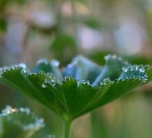 Dew to Drop by WendysPhotos