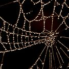 Spider Web by Nathaniel Arnold