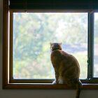 Angus at the Window by Andrew Trevor-Jones