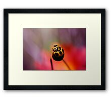 Ready to fly! Framed Print