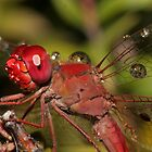 Happy little dragonfly covered in water droplets by Rick Fin