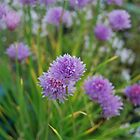 Chives by mickeydoodah