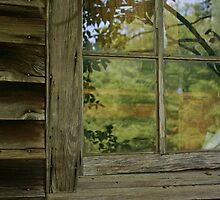 Window Reflection by bcollie