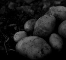 Potatoes at the allotment by Kaylea