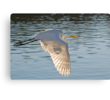 Egret and Sun Canvas Print