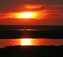 Chobe Sunset by Rebecca Conroy
