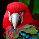 Parrot Portrait .......  by jdmphotography