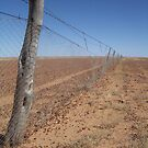 the dingo fence by Matt  Williams