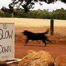 Slow Down.......Please by davenreef