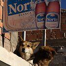 Norte by Ryan Bird