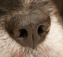 Big Wet Nose by Mark Lee