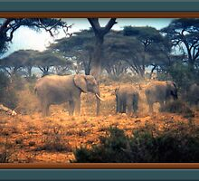 Out Of Africa #12 by George  Link