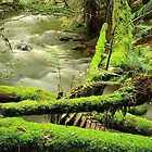 Mt Field National Park by bazza76d