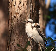 Kookaburra pair by Peter de Groot