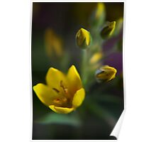 Yellow parade (from wild flowers collection) Poster
