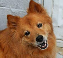 'Happy Dog 2' by Scott Bricker