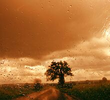 Driving in the Rain by nikspix