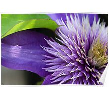 Passion In Purple Poster