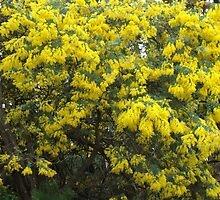Wattle by ScenerybyDesign