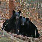 Mama Bear And Cub by marilynwood