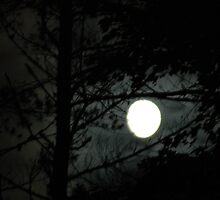 Moon Through the Trees by timason