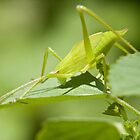 Green Hopper by Lawrence Crisostomo