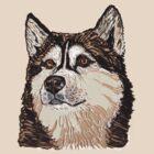 Siberian Husky by Barbara Applegate