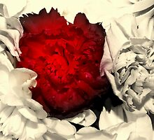 A Rose is a Rose by Adrena87