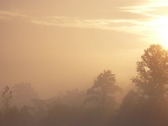 Sunrise Fog by Veronica Schultz