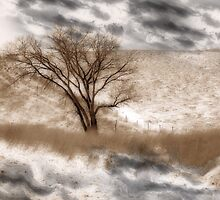 Colorado Winter by CarolM