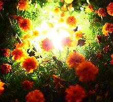 night flower by thinking-fish