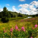 River bank's flower meadow by Veikko  Suikkanen