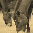 Grazing by roxanne photography