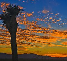 Joshua Tree Silohette Sunset by photosbyflood