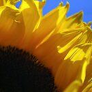 Sunflower by Alyssa Dionne
