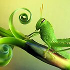 Grasshopper-larva by jimmy hoffman
