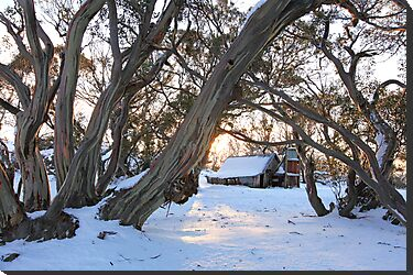 Wallace Hut Dawn, Falls Creek, Victoria, Australia by Michael Boniwell