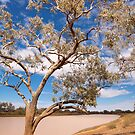 Diamantina National Park by Blue Gum Pictures