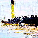 Gator, Mark, Get Set, Goooo!  by Daneann