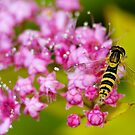 bee over a flower by patrick pichard
