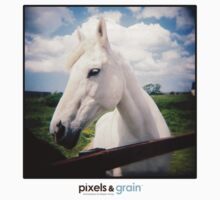 Holga White Horse by Megan Young